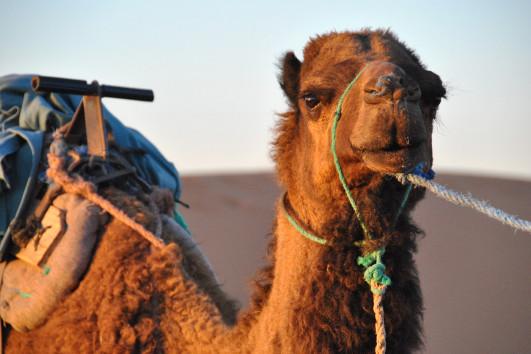 Desert/Camel Ride